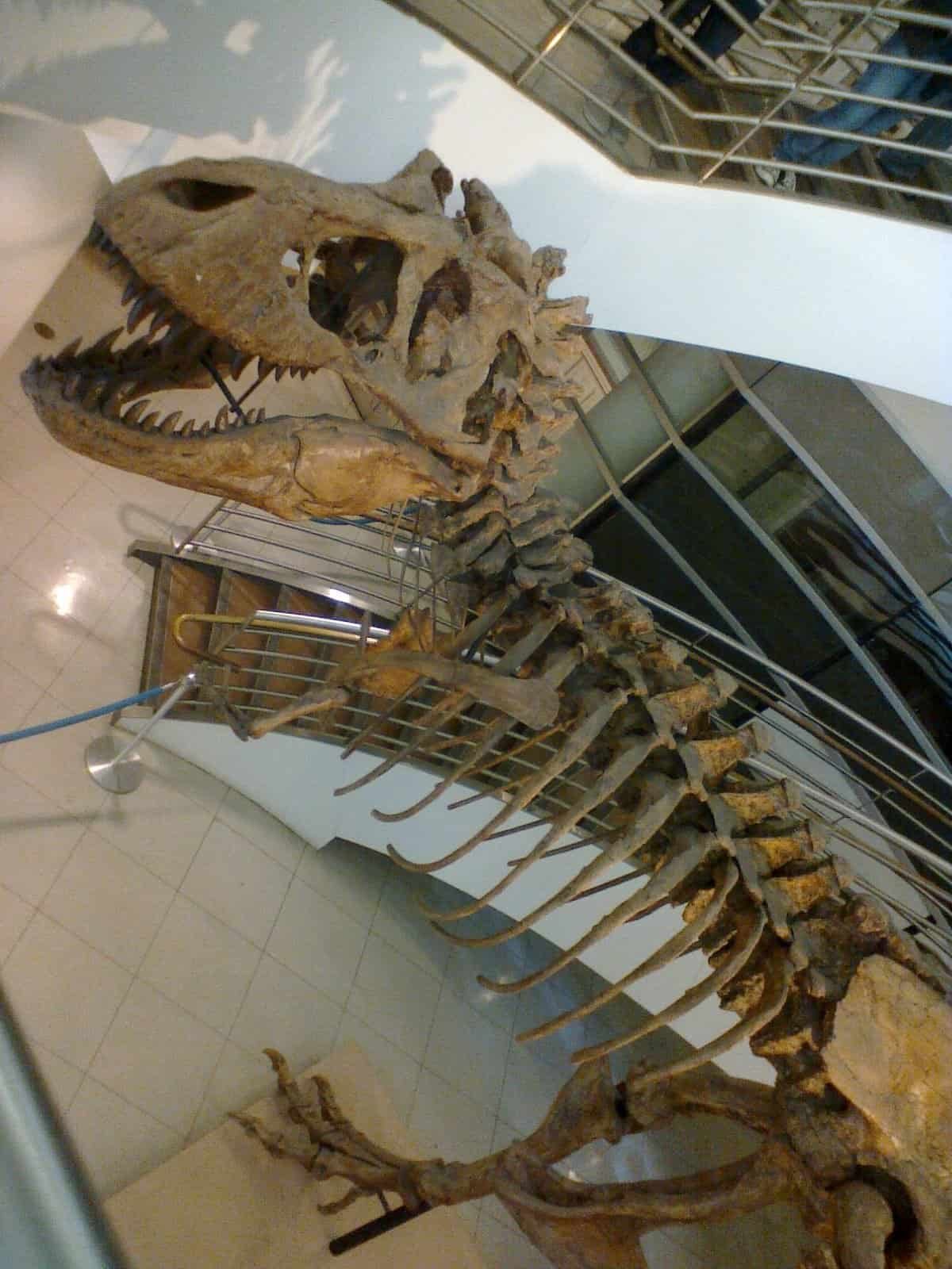 T-Rex skeleton in the Valley Science Building at UC Berkeley