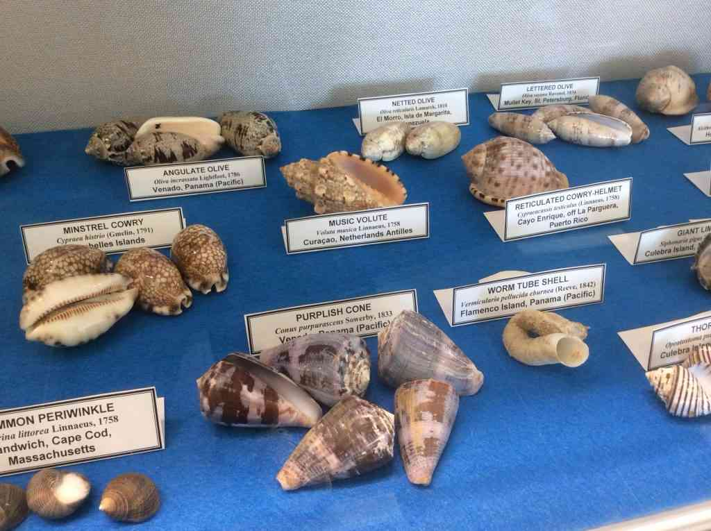 Magellan Counseling - URI shell collection in life sciences bldg