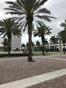 Florida-Atlantic-University-palm-trees