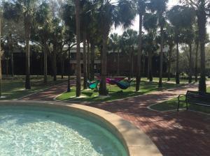 Stetson-University-hammocks
