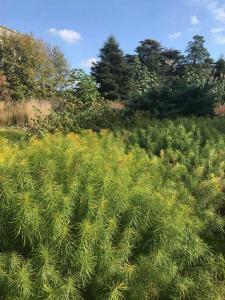 Swarthmore Nason Garden