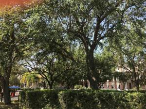 U-Tampa-old-trees