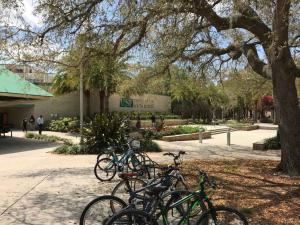 U-of-South-Florida-Bikes-to-get-across-campus