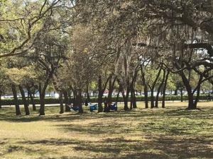 U-of-South-Florida-Hanging-around
