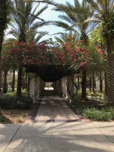 U-of-South-Florida-Rose-Trellis