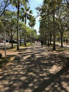 U-of-South-Florida-city-within-a-city