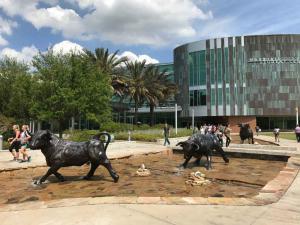 U-of-South-Florida-original-mascot-Golden-Brahman