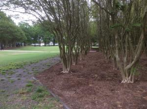 Old-Dominion-green-space