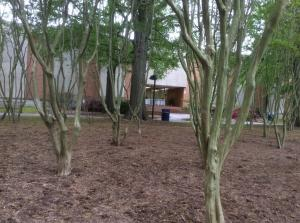 Old-Dominion-trees-quad