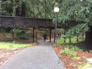 UC-Santa-Cruz-visit-campus-bridge