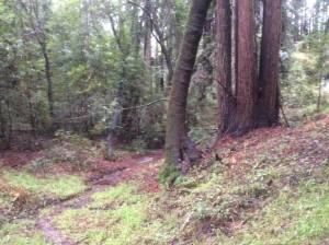UC-Santa-Cruz-visit-redwoods-1