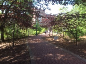 University-of-Richmond-path-to-international-center